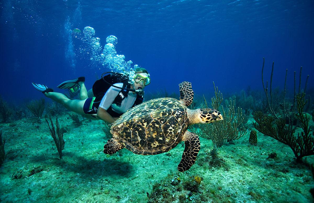 plongée avec les tortues
